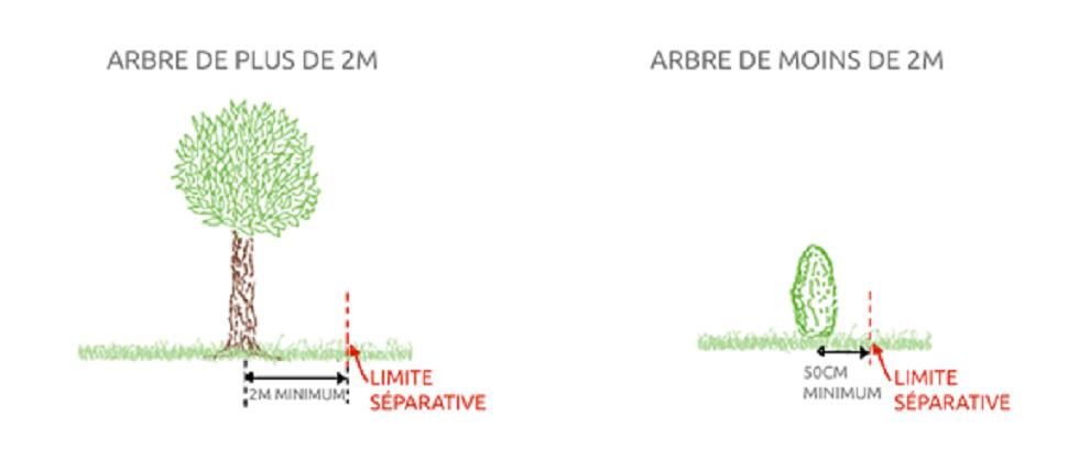 distance des arbres